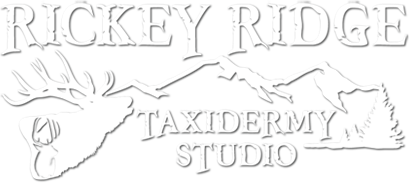 Taxidermy Mounts Madison Wisconsin | Custom Wildlife Animal Taxidermist | Rickey Ridge Taxidermy